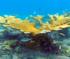 Coral Puzzle
